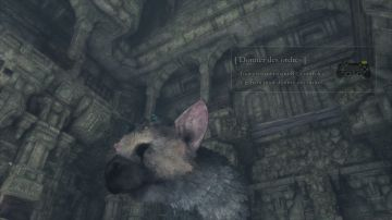 Immagine -4 del gioco The Last Guardian per Playstation 4