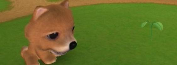 The Dog Island per Nintendo Wii
