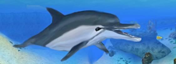 L'Isola dei Delfini: Avventure sottomarine per Nintendo DS
