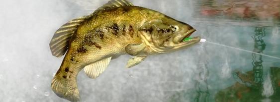 Rapala Pro Bass Fishing per Xbox 360