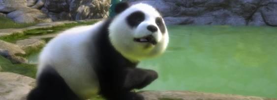 Kinectimals Ora con gli orsi per Xbox 360