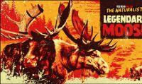 Red Dead Online - Due magnifici Alci Leggendari avvistati nella natura