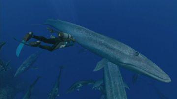 Immagine -3 del gioco Endless ocean 2 Avventure Negli Abissi per Nintendo Wii
