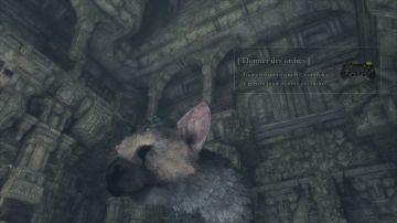 Immagine -4 del gioco The Last Guardian per Playstation 4